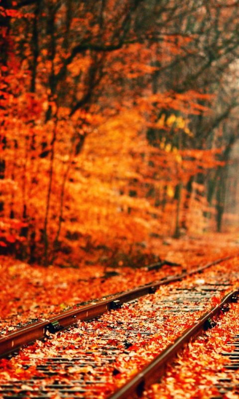 Free Fall Wallpaper For Iphone Red Leaves On Rail Track Wallpaper Hd Wallpaper Background