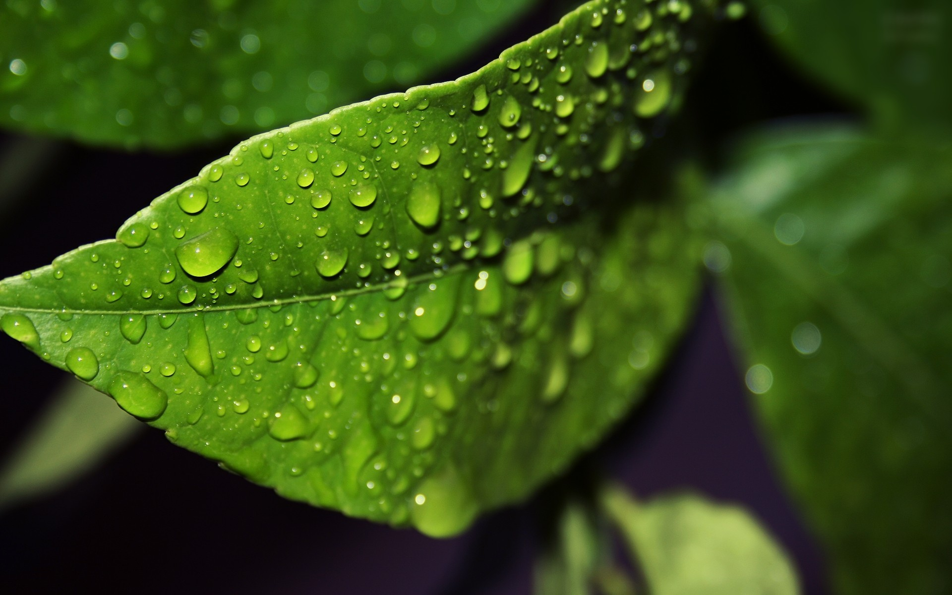 Falling Water Wallpaper 1080p Green Nature Leaves Water Drops Macro Wallpaper