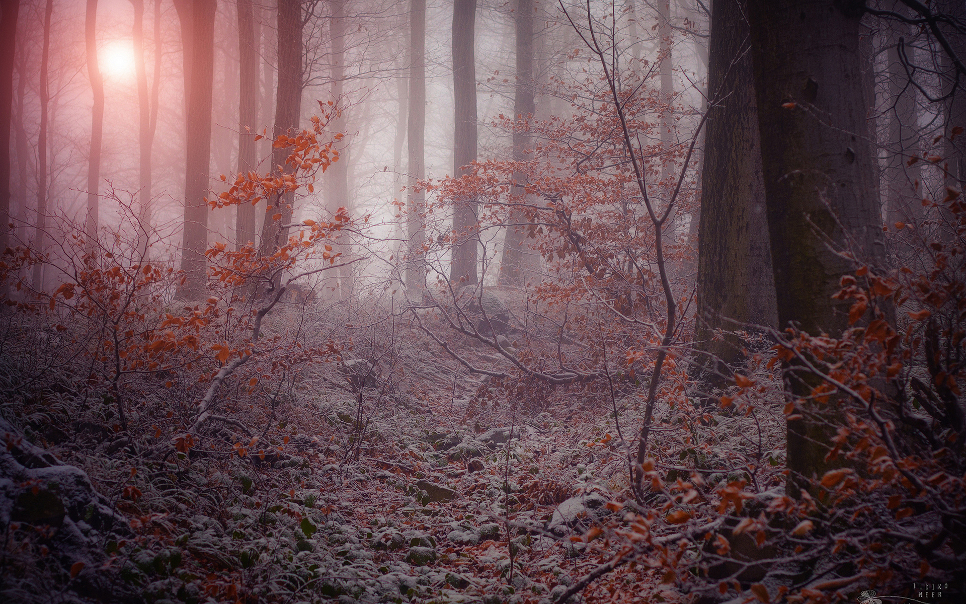 Fall Wallpapes Nature Landscapes Trees Forest Autumn Fall Seasons Morning