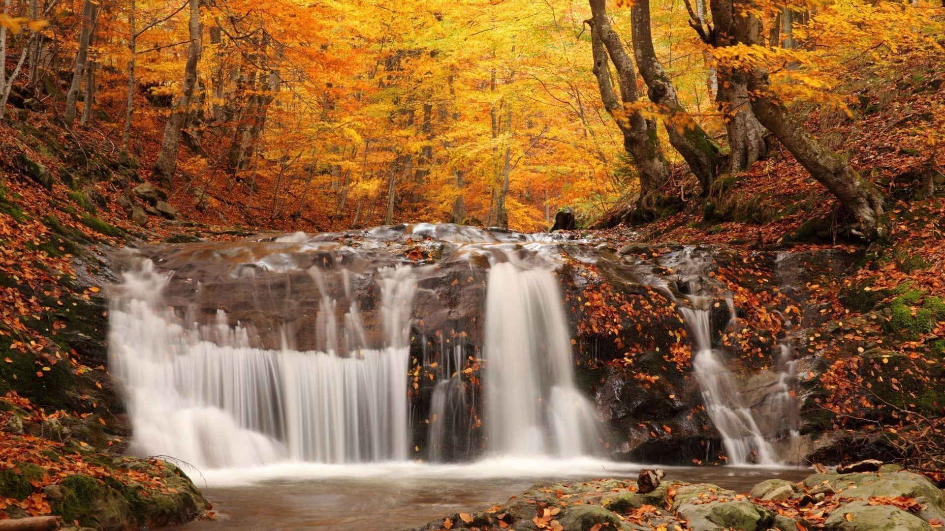 Fall Autumn Hd Wallpaper 1920x1080 Landscapes Nature Waterfall Rivers Trees Forest Autumn