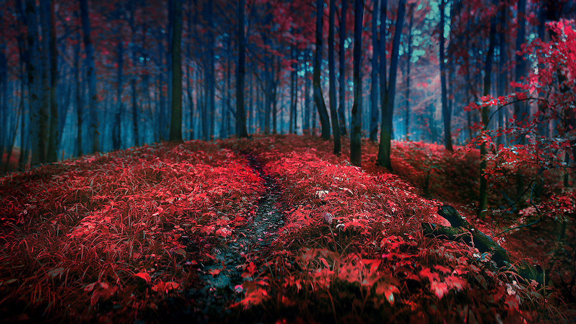 Leaves Wallpaper Fall Landscapes Nature Trees Forest Autumn Fall Seasons Red