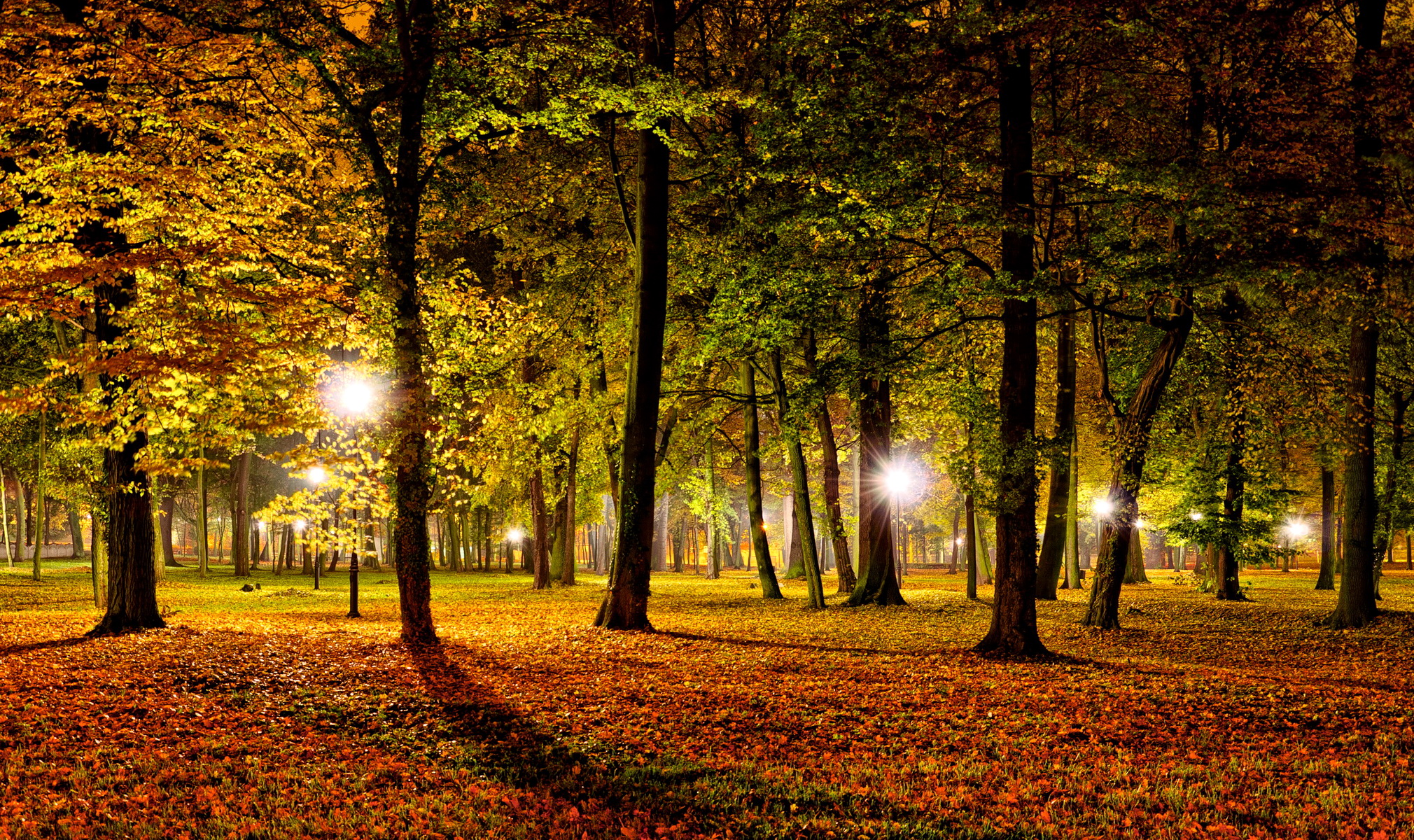 Fall In Maine Wallpaper Nature Landscapes Leaves Park Night Lights Dark Trees