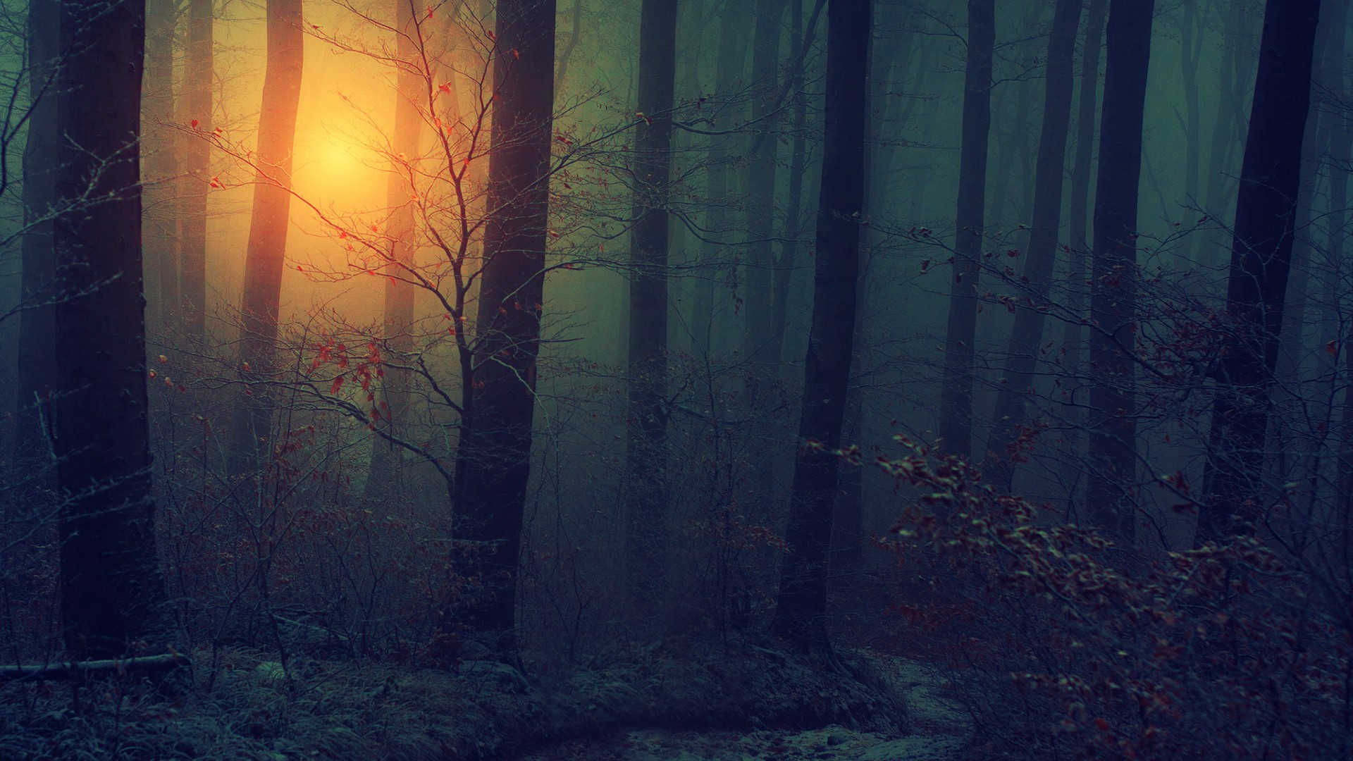 Dark Fall Wallpaper Nature Landscapes Trees Forests Wood Floor Leaves Autumn