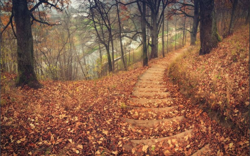 Fall Path Wallpaper Nature Landscapes Trees Forest Path Stairs Tracks Roads