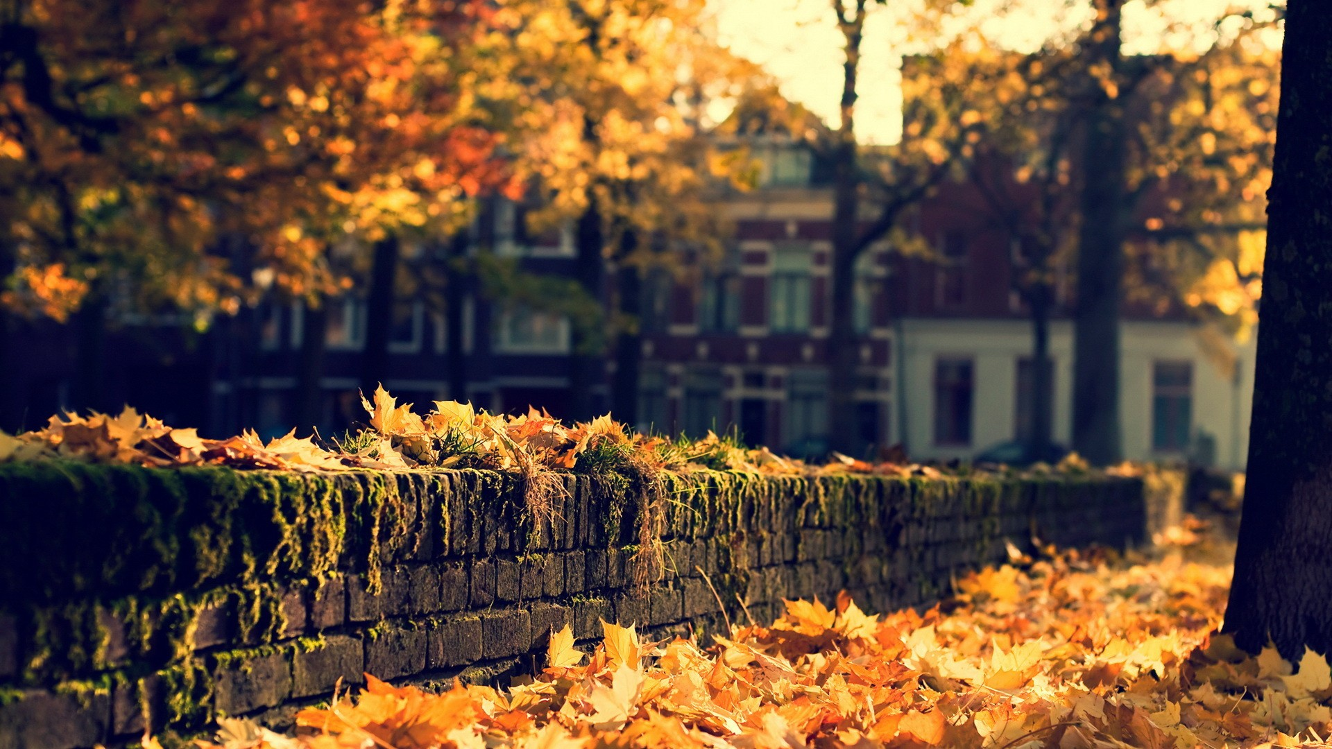 Fall Wallpaper Nature Leaves Autumn Fall Seasons Trees Wall Stone