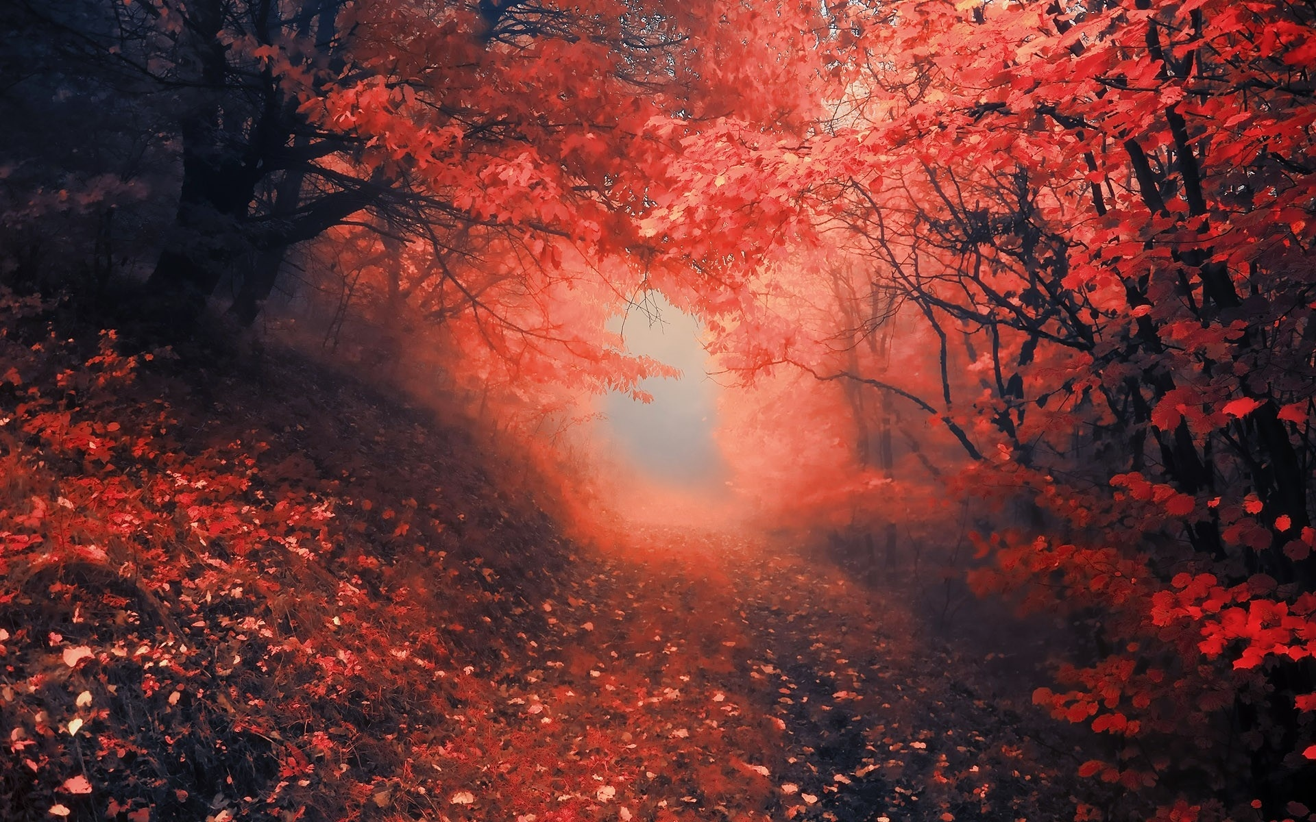 Dark Fall Iphone Wallpaper Nature Roads Landscapes Trees Forest Path Trail Leaves Red