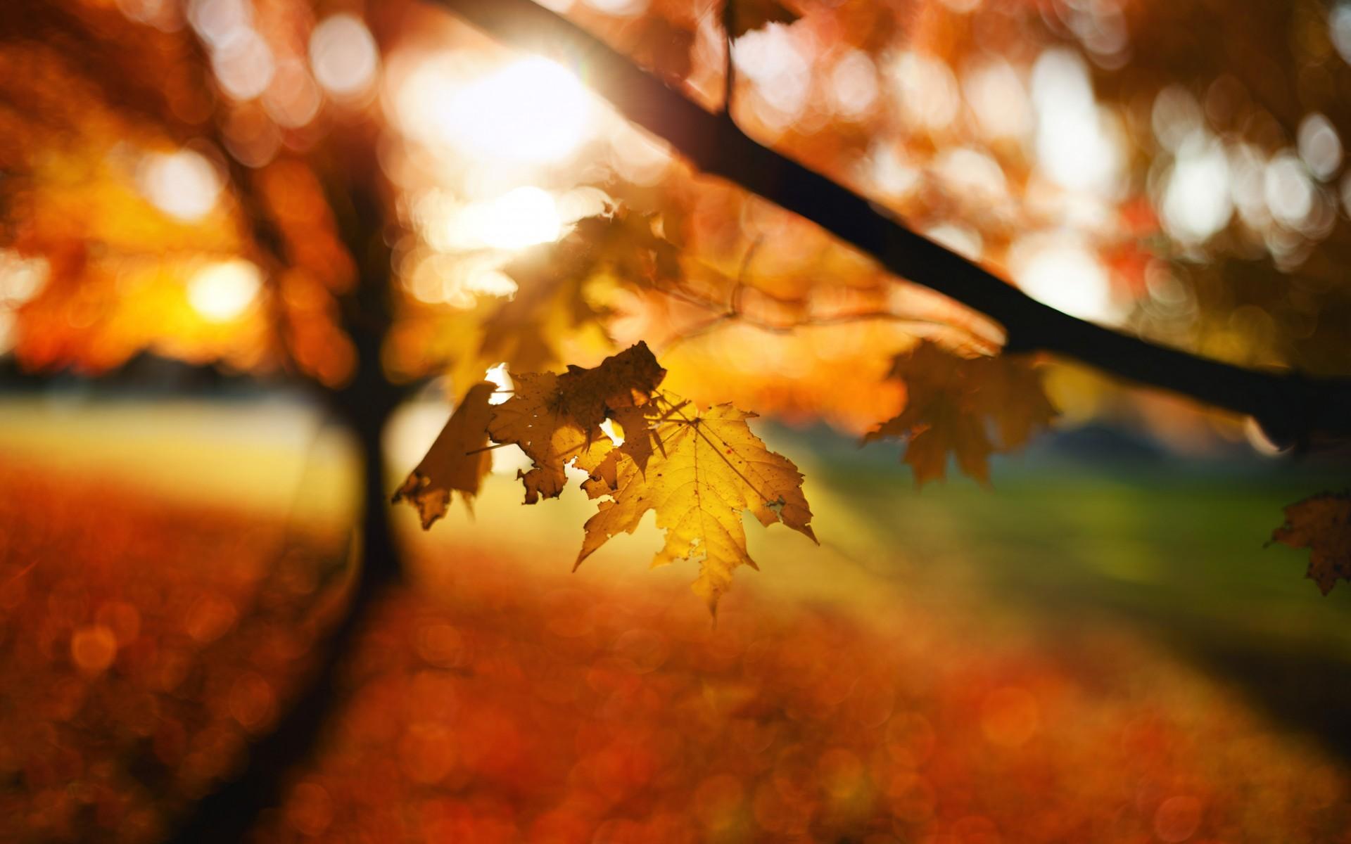 Fall Trees Wallpaper Leaves Autumn Bokeh Trees Wallpaper 1920x1200 48448