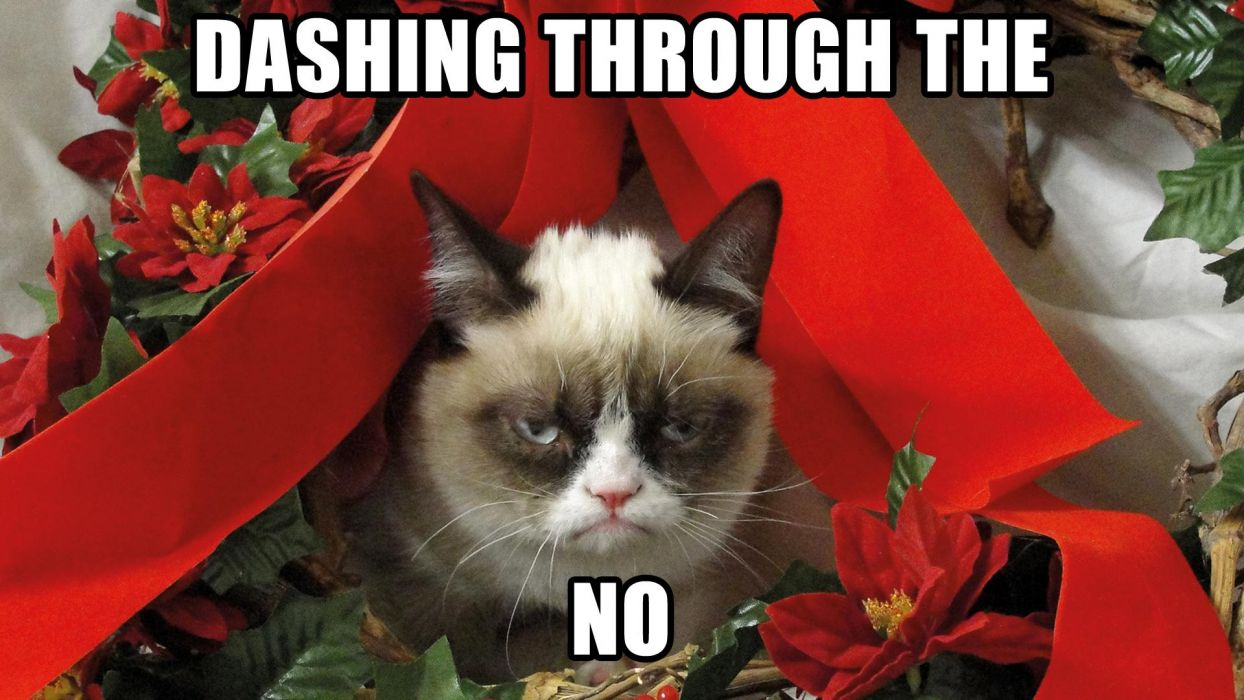Cute Cats And Kittens Wallpaper Hd Cat Themes Grumpy Cat Meme Pictures Humor Funny Cats Christmas