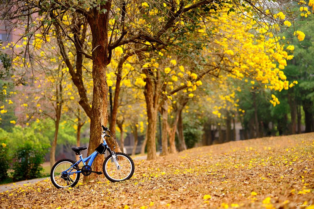Wallpaper Fall Images Spring Flowers Yellow Trees Bike Autumn Fall Mood Bokeh