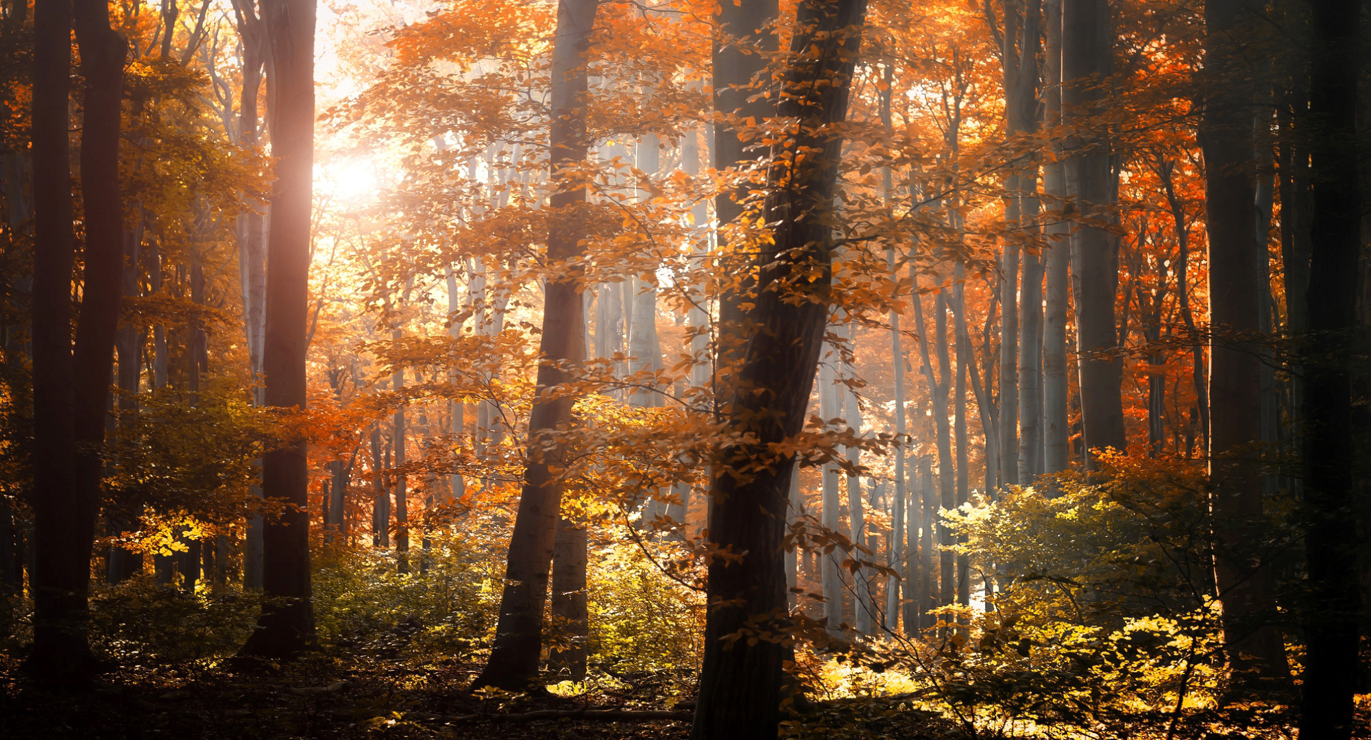 Pinterest Wallpapers Fall Forest Autumn Foliage Trees Leaves Orange Yellow Light