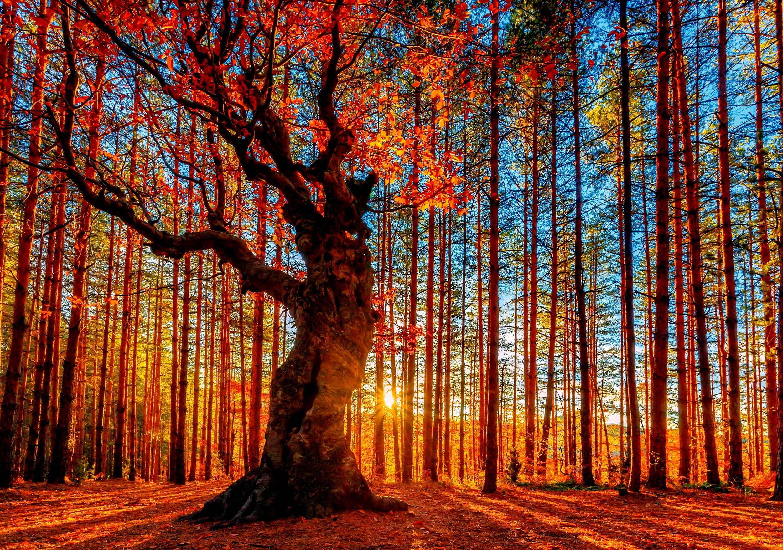 Wallpaper Hd 1920x1080 Fall Forest Sky Trees Autumn Foliage Wallpaper 2500x1757