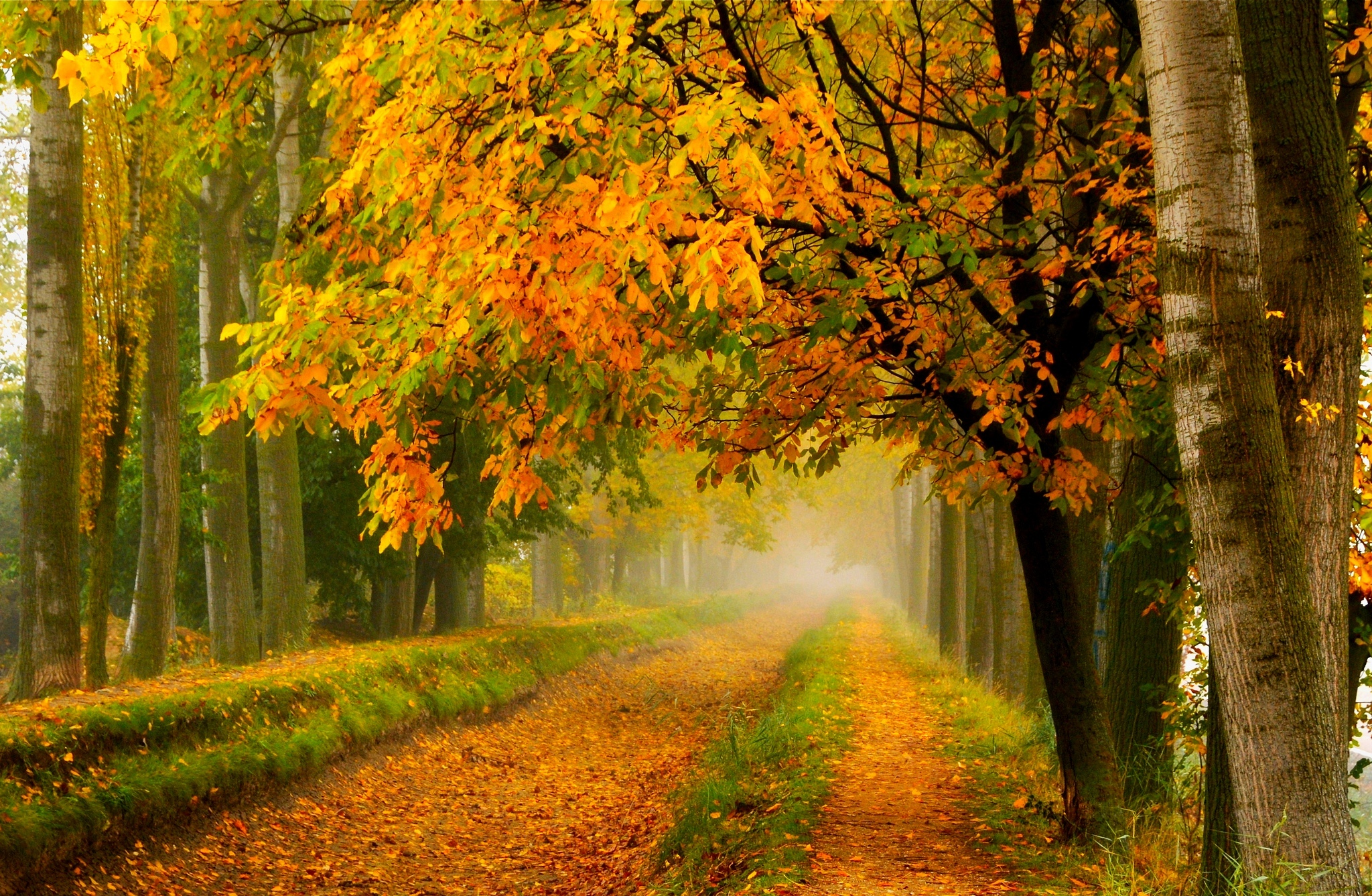 Wallpaper For Fall And Autumn Fall Colors Walk Leaves Autumn Nature Trees Road Forest