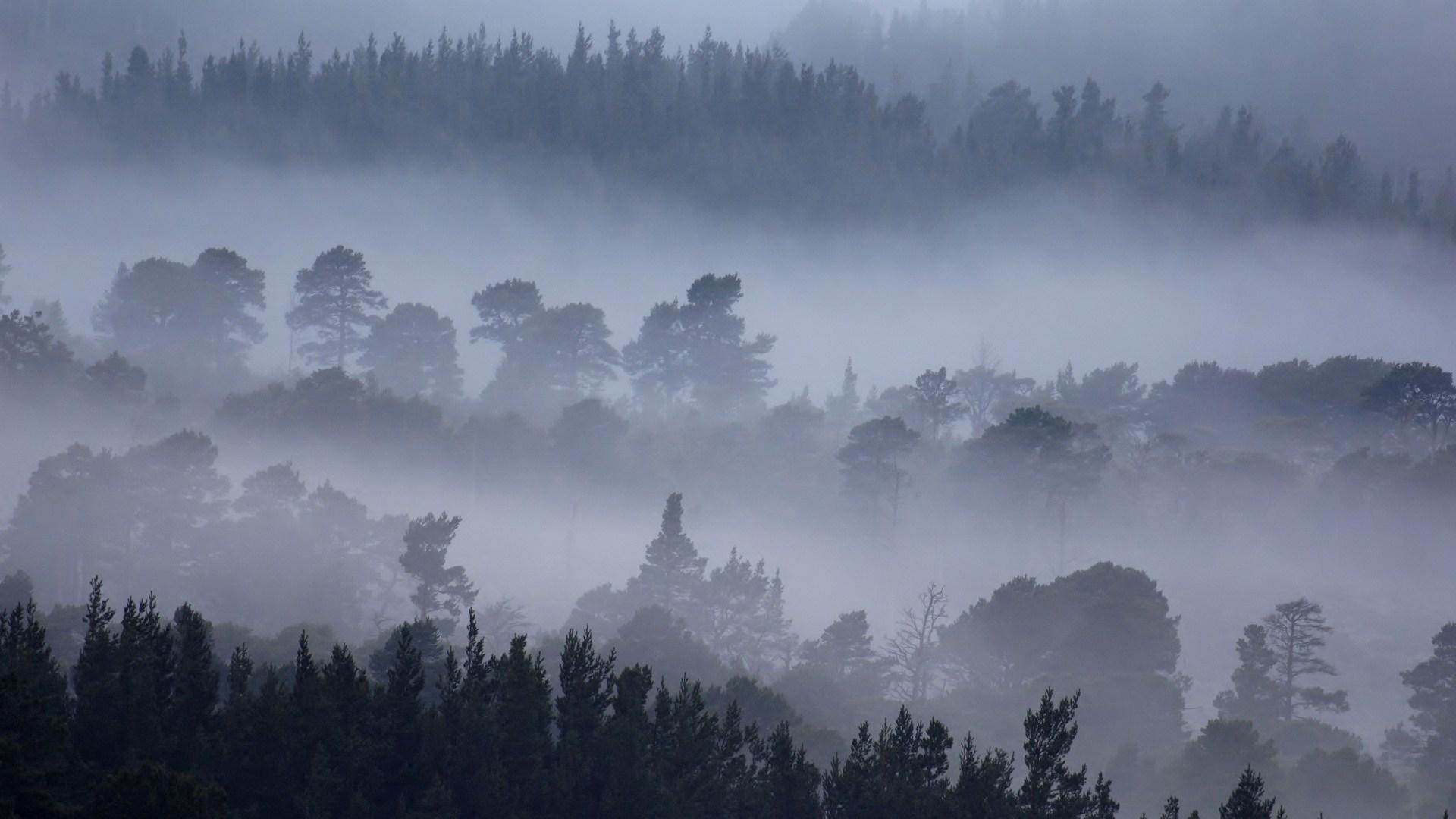 Foggy Fall Wallpaper Nature Mountain Forest Fog Tree Landscape Hd Wallpaper