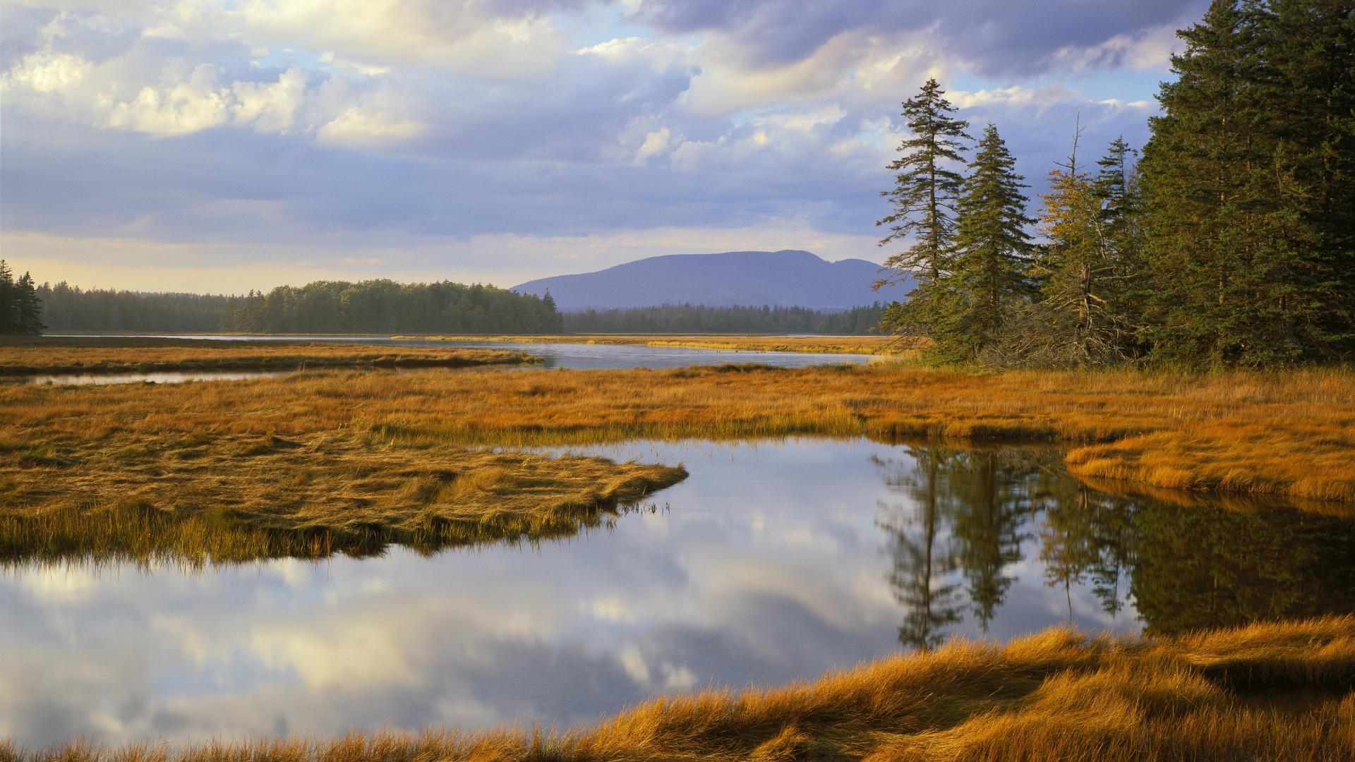 Christmas 3d Wallpaper Download Landscapes Trees Maine Bass Harbor National Park Marsh