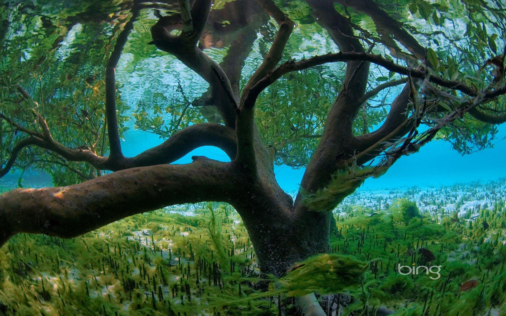 Numa Falls Canada Wallpaper Trees Plants Seychelles Underwater Branches Bing Wallpaper