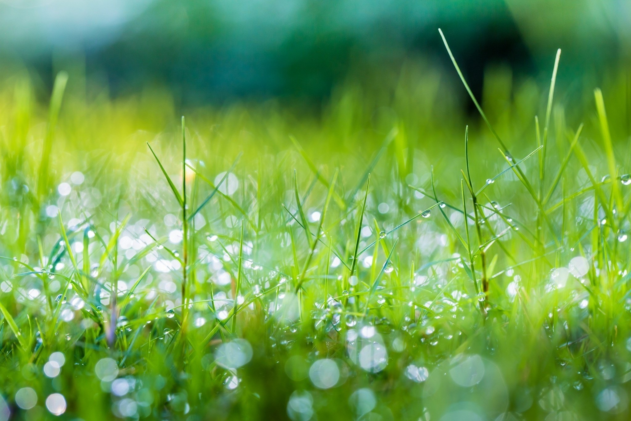 Fall Season Desktop Wallpaper Grass Dew Drops Shine Summer Macro Green Wallpaper