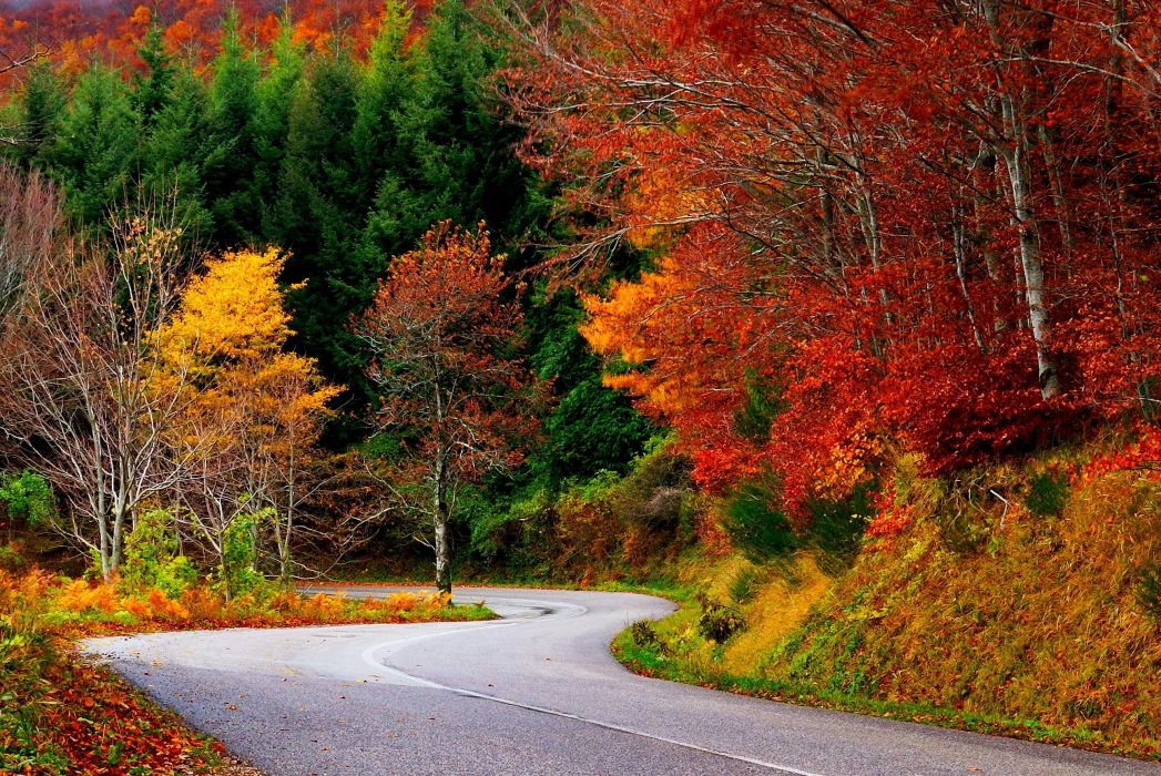 Path forest autumn fall road leaves trees colorful nature wallpaper