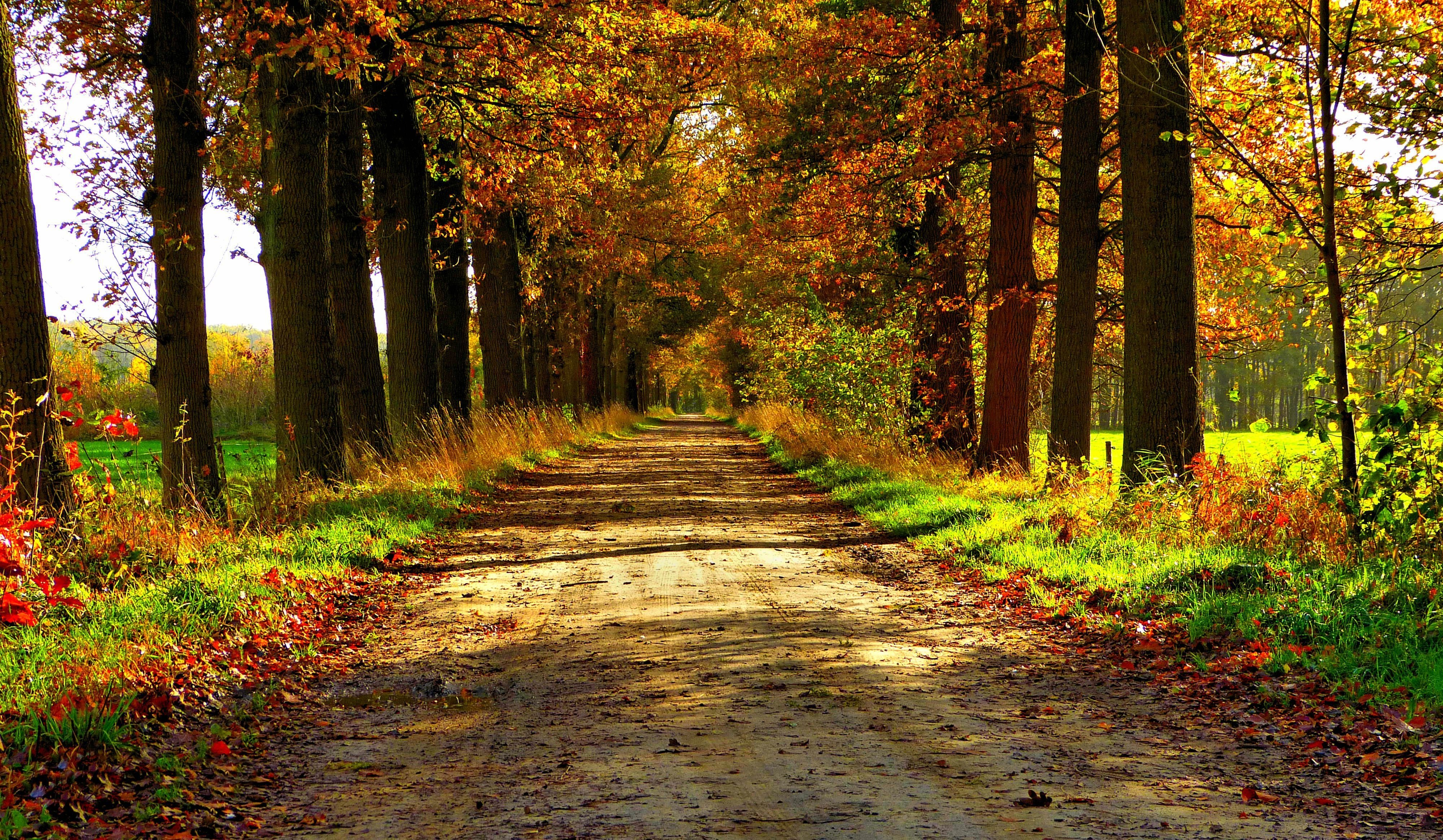 Fall Leaves Road Wallpaper Autumn Nature Forest Path Park Colorful Leaves Trees Road