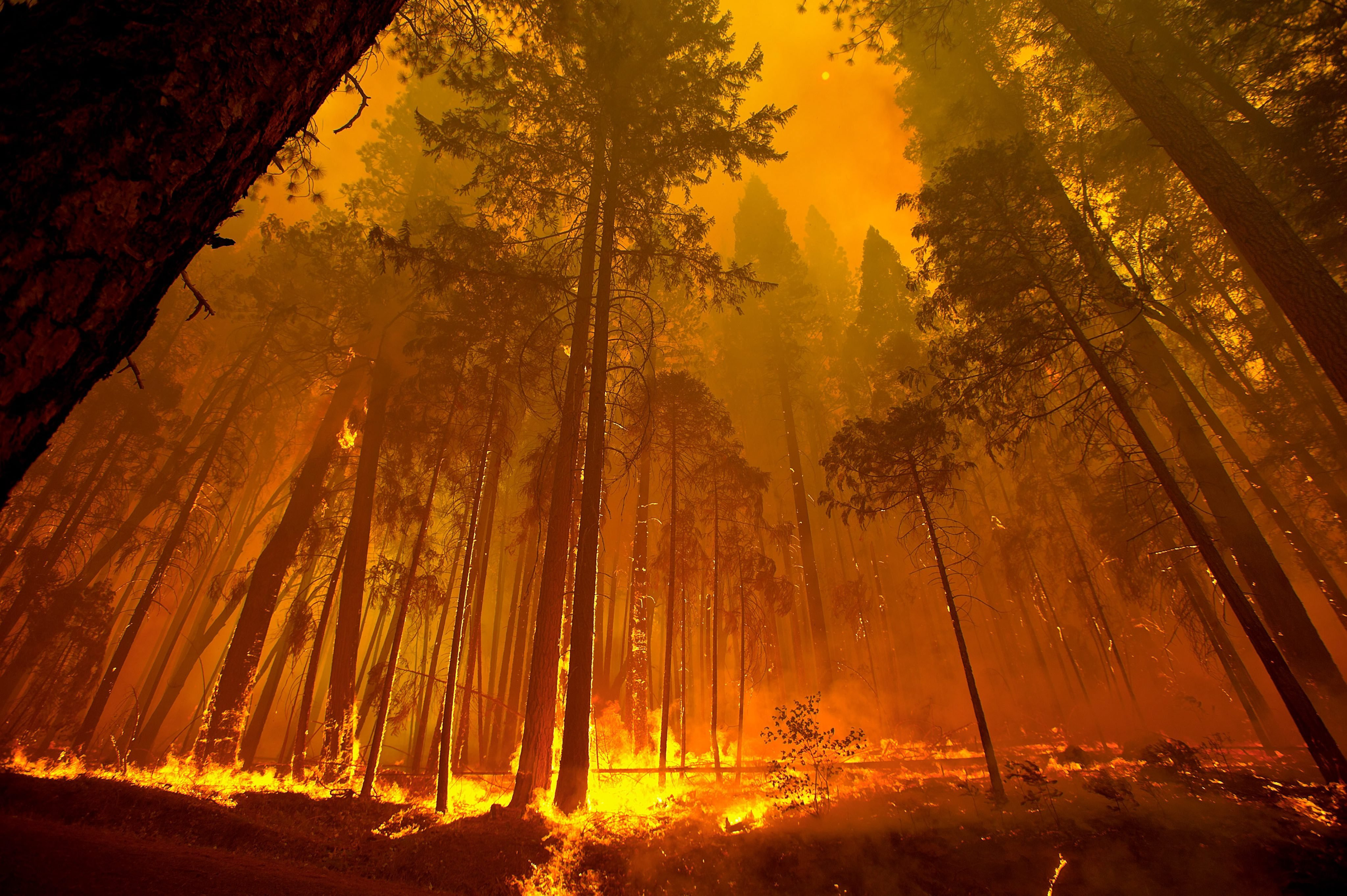 Hd Wallpaper Yosemite Fire Fall Forest Fire Flames Tree Disaster Apocalyptic 16