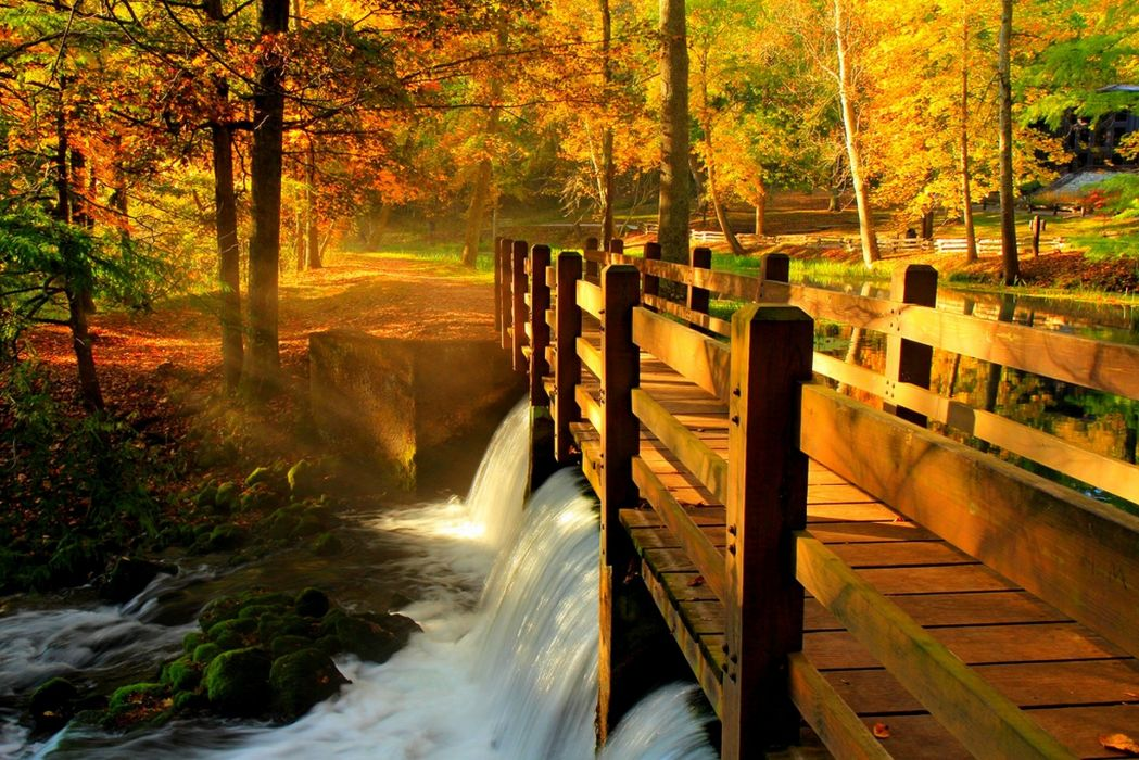 Falling Water Live Wallpaper Leaves Park Alley Trees Forest Autumn Walk Hdr Nature