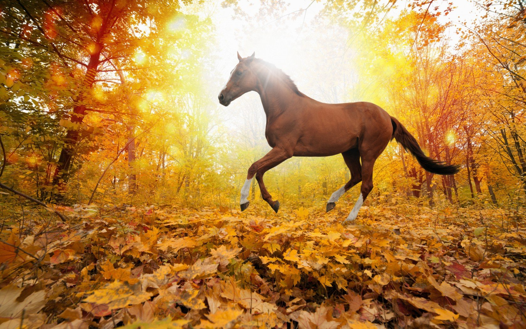 Fall Facebook Wallpaper Nature Forest Leaves Fall Horse Wallpaper 1680x1050
