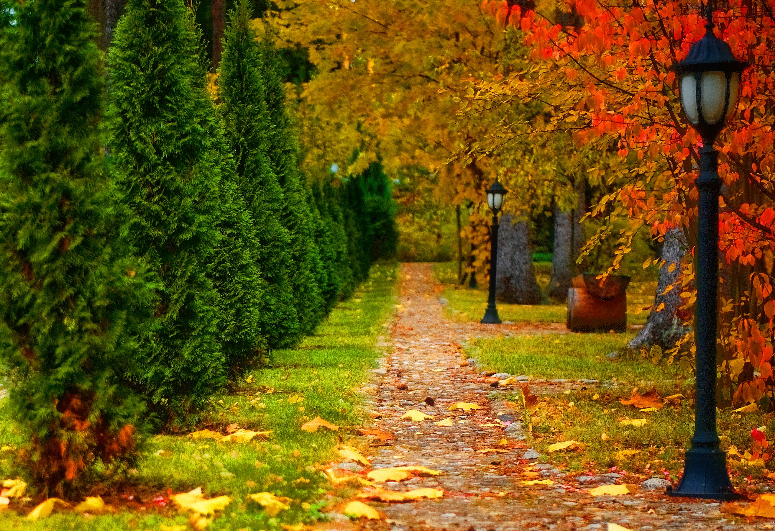 3d Tree Live Wallpaper Nature Landscape Autumn Road Trees Lantern Leaf Wallpaper