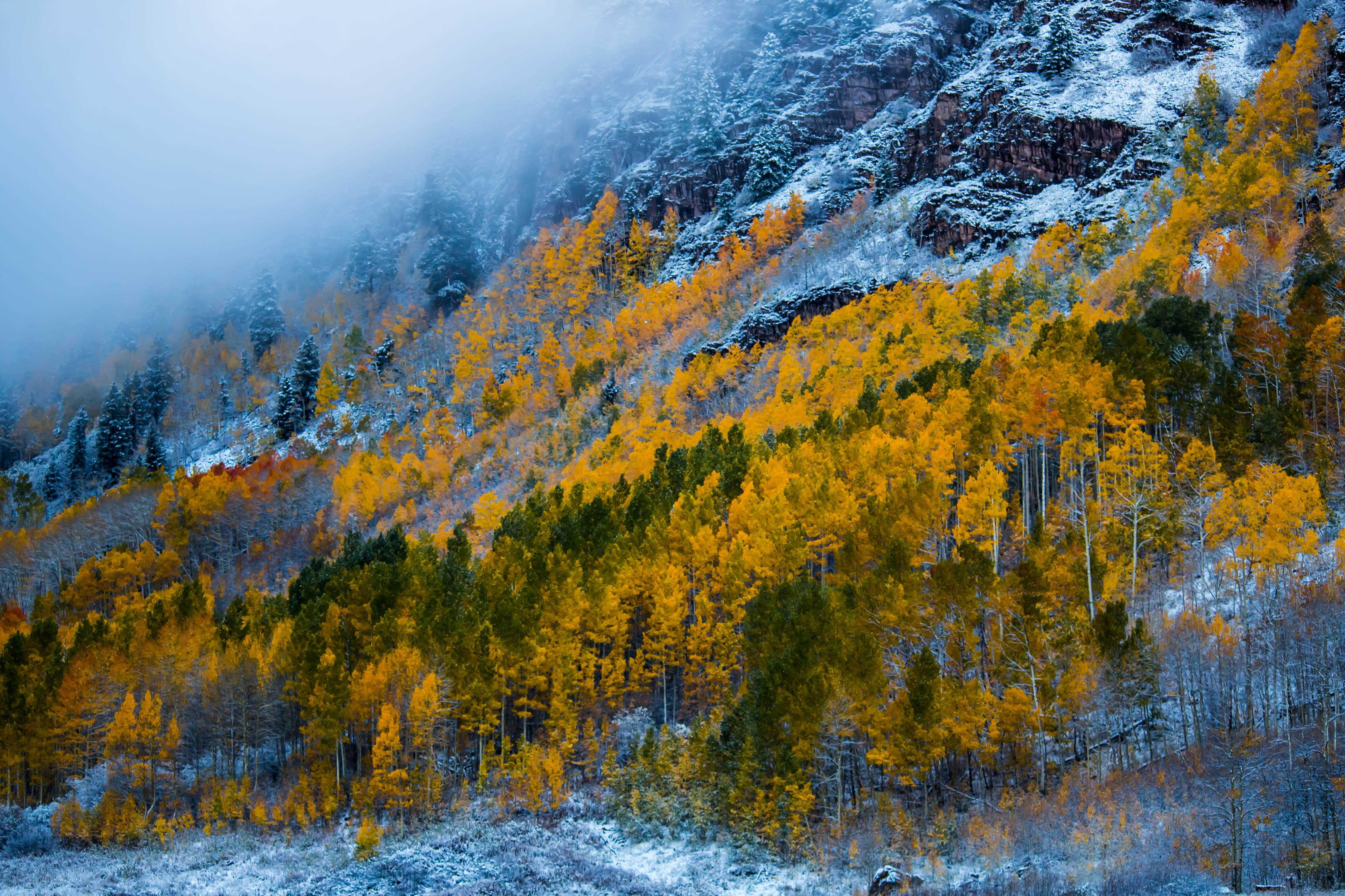 Fall Woods Wallpaper Snow Mountains Woods Forest Maroon Bells Colorado Autumn