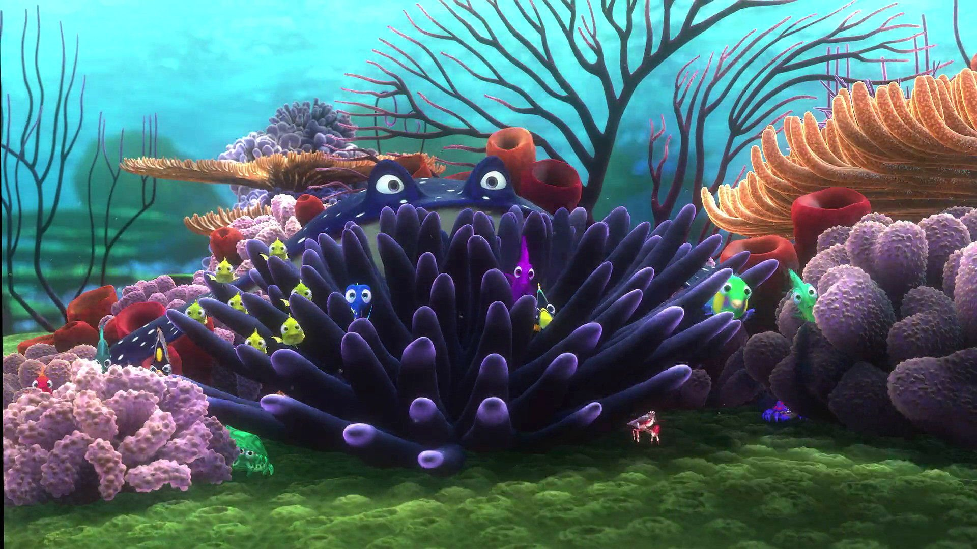 Sid 3d Name Wallpaper Finding Nemo Animation Underwater Sea Ocean Tropical Fish