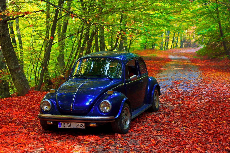 Cars Wallpaper Hd Wallpaper Bursa Turkey Forest Classic Car Tree Landscape Wallpaper