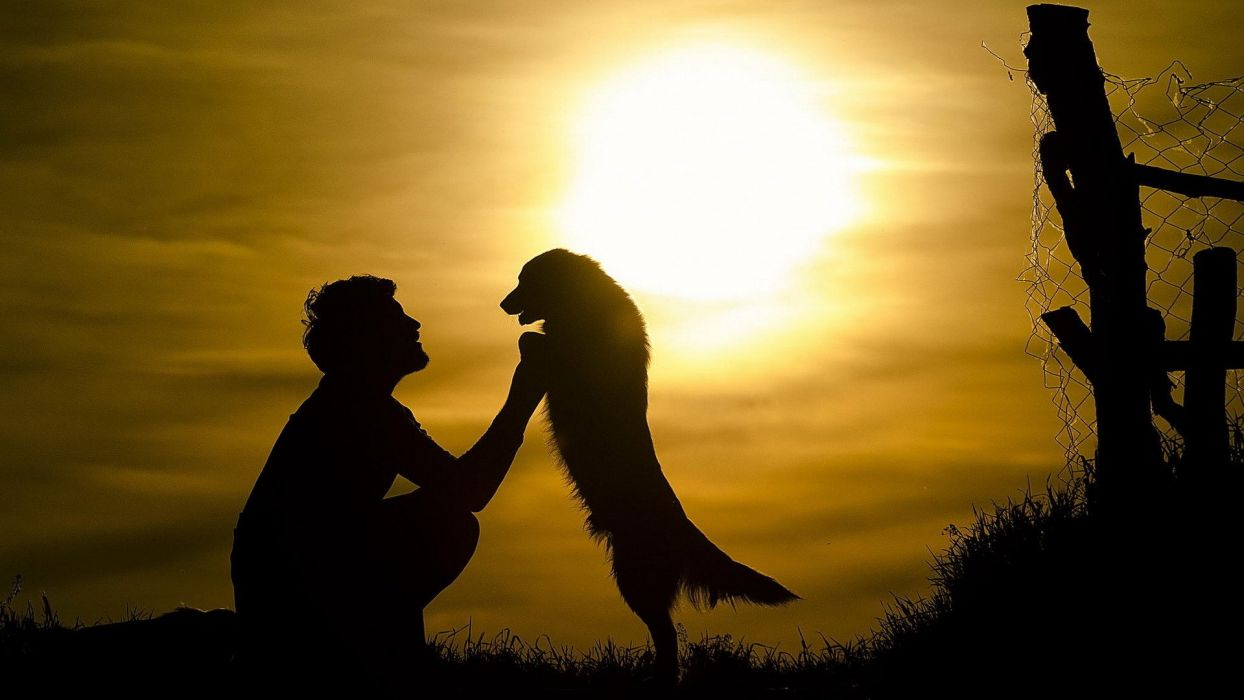 Sad Girl Sitting Alone Hd Wallpapers Mood Boy Dog Friends Sun Sunset Silhouette Animals