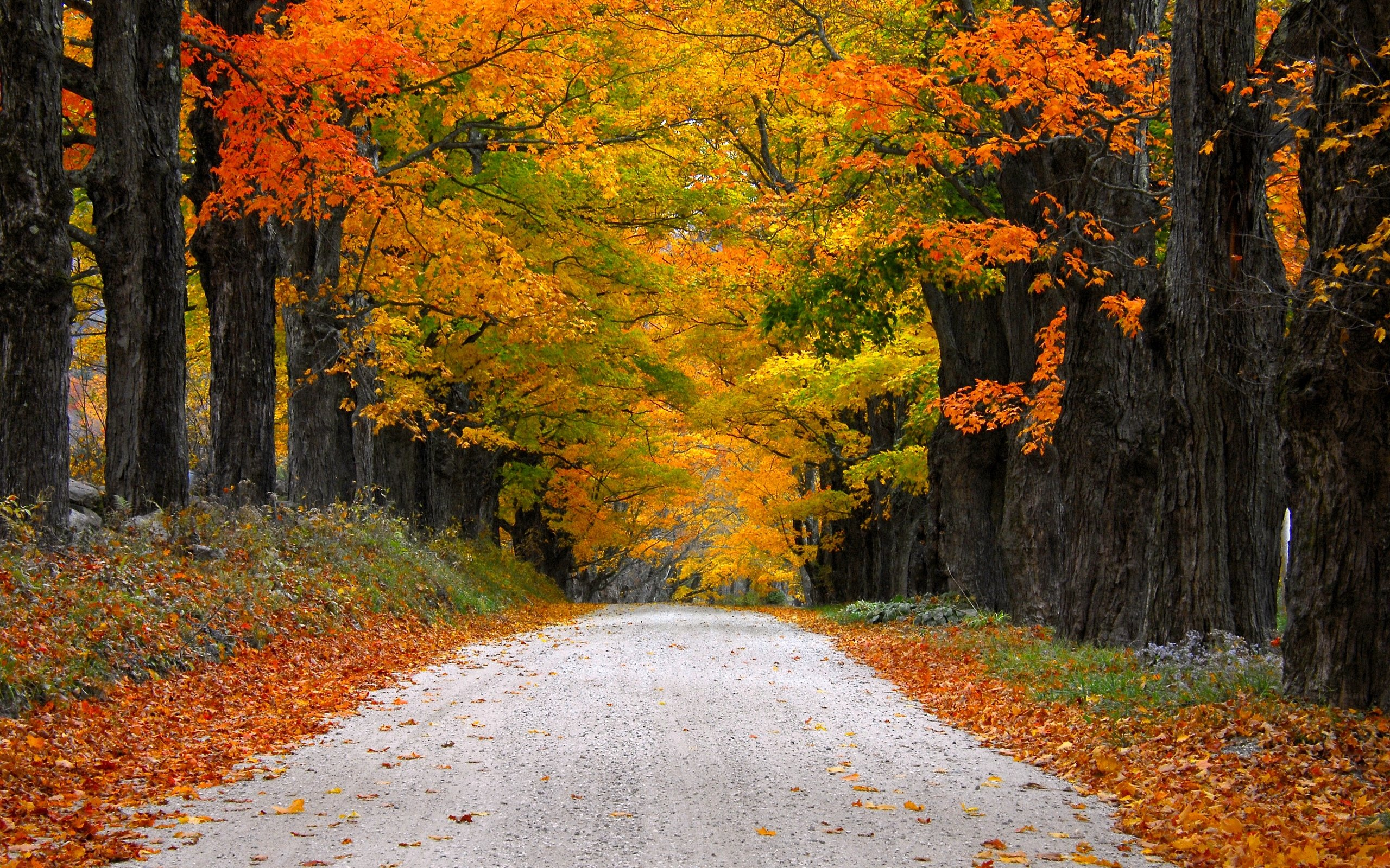 Fall Leaves Pathway Computer Wallpaper Autumn Nature Path Leaves Mountain Fall Colorful Trees