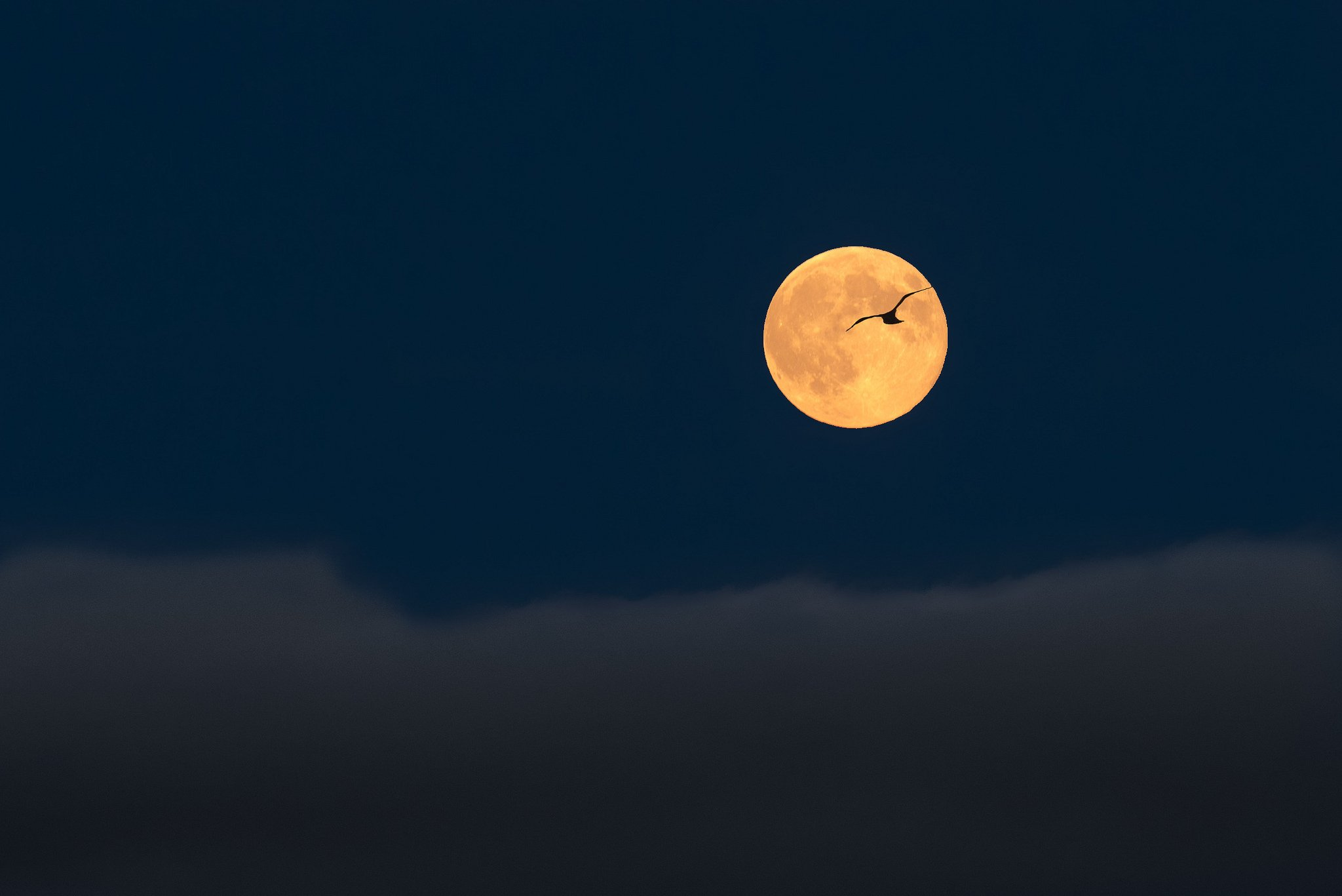 Big Size Wallpapers With Quotes Full Moon Sky Clouds Birds Flight Silhouette Landscape