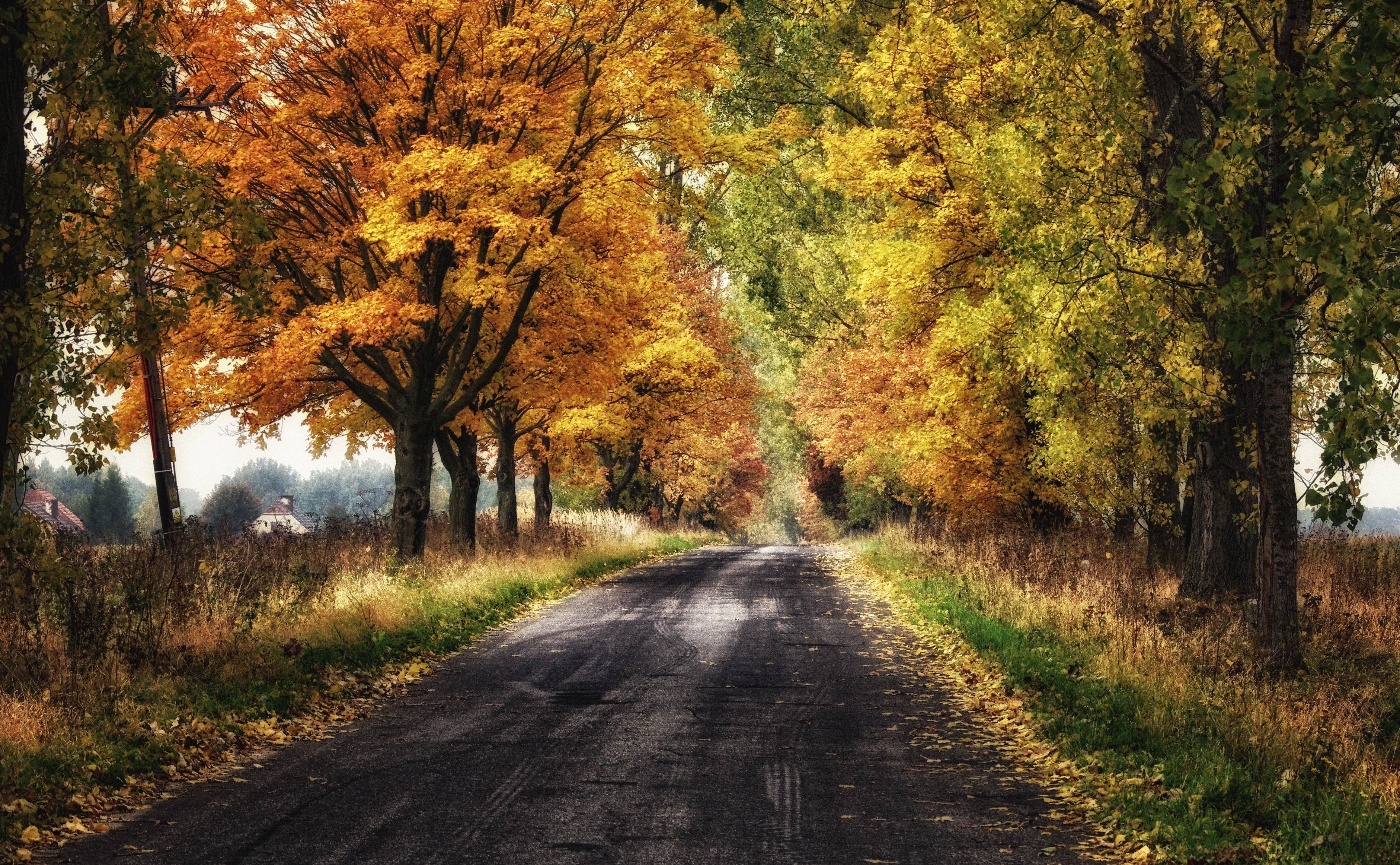 Fall In Central Park Wallpaper Landscape Nature Tree Forest Woods Autumn Road Path