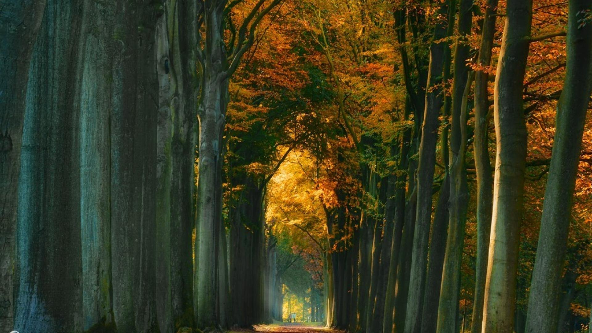 Fall Autumn Hd Wallpaper 1920x1080 Landscape Nature Tree Forest Woods Autumn Road Path People