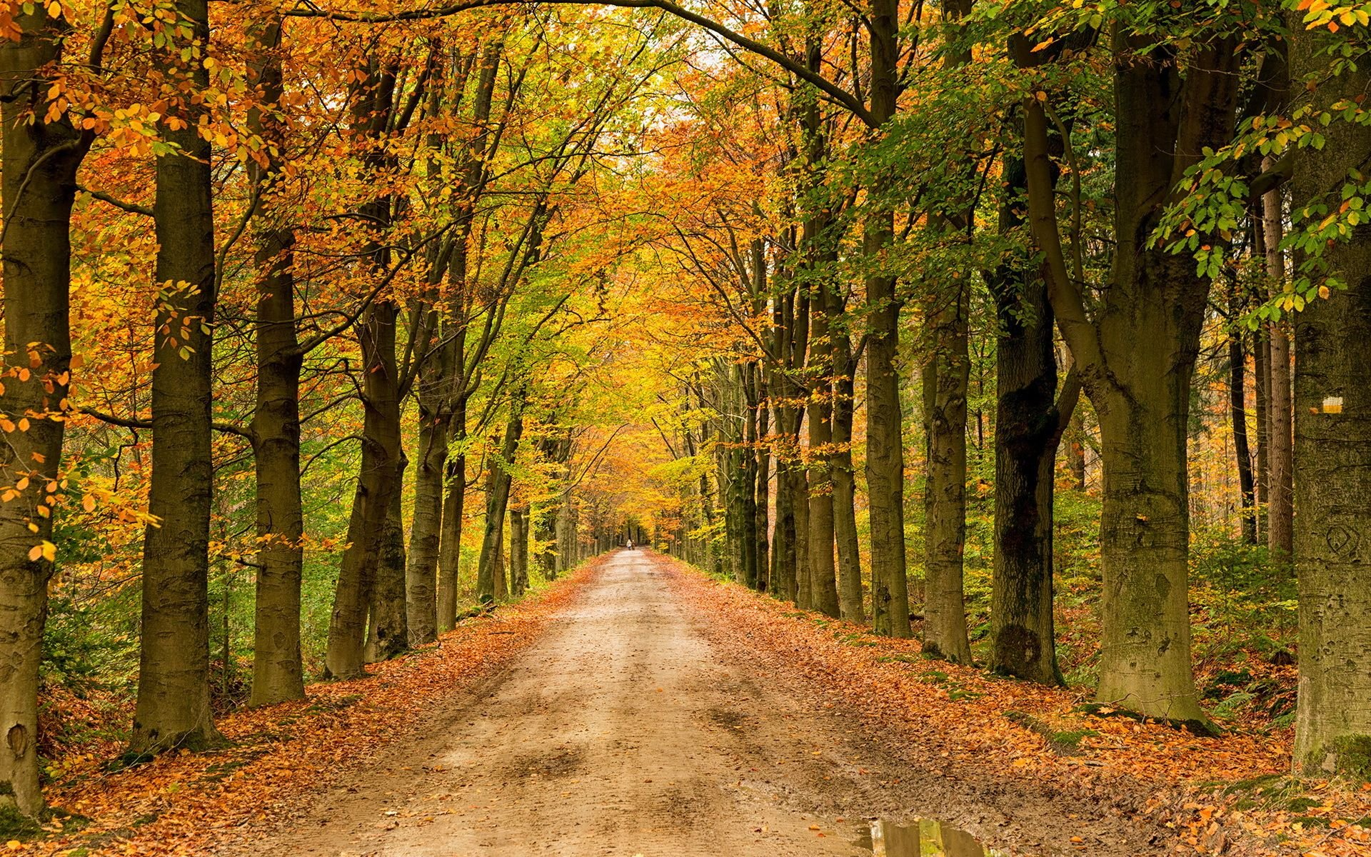Fall Wooded Wallpaper Landscape Nature Tree Forest Woods Autumn Path Road
