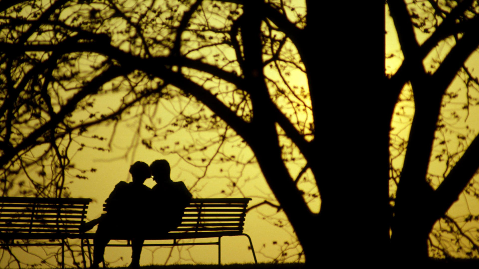 Girl And Boy Sitting Together Wallpaper Photography Couple Love Tree Silhouette Romance Bench Park