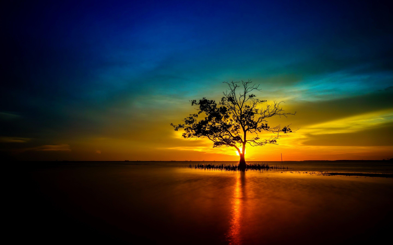 Free Fall Tree Wallpaper Tree Lonely Sunset Sunrise Landscape Nature Sun Reflection