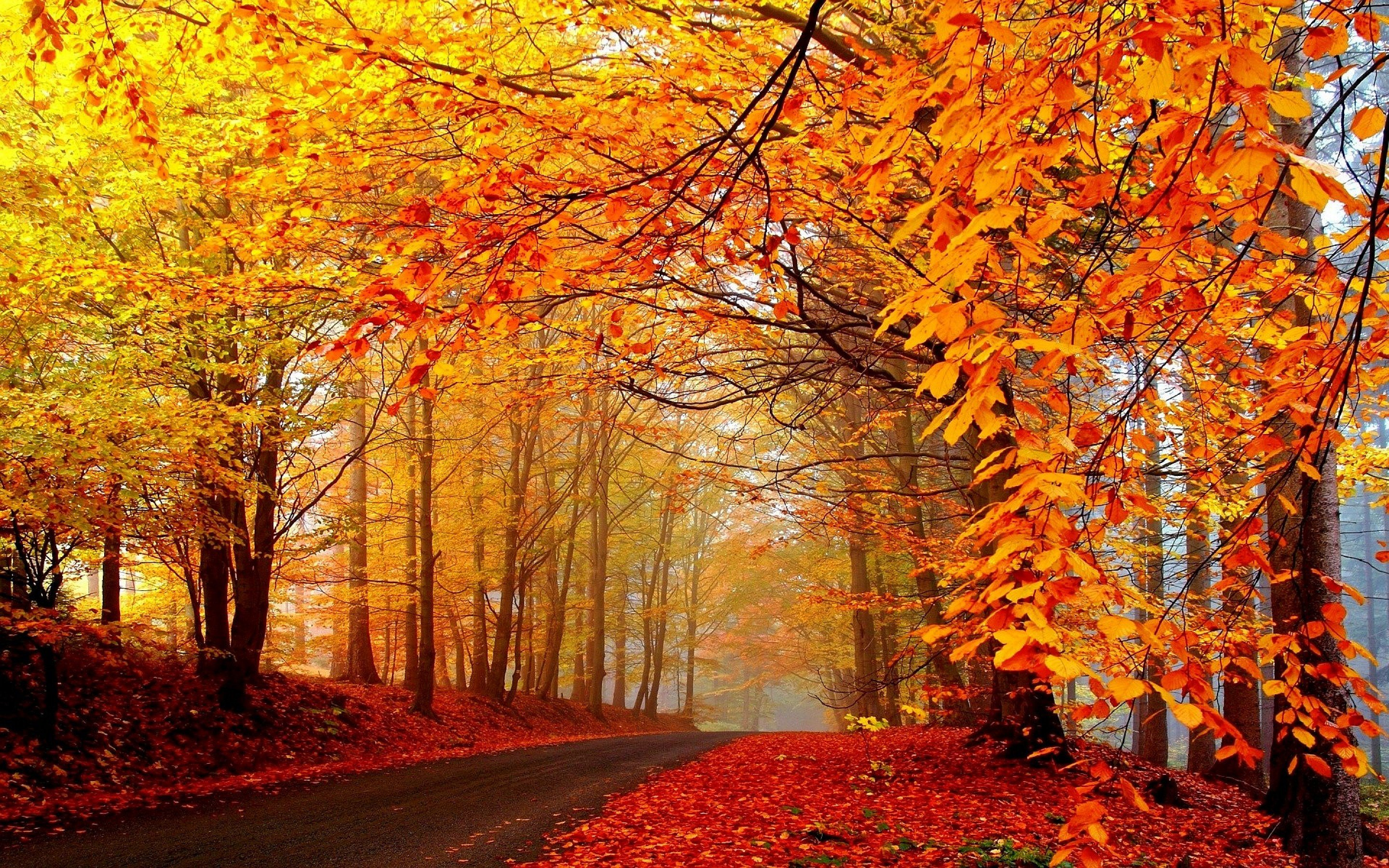 Fall Trees Wallpaper Autumn Fall Landscape Nature Tree Forest Leaf Leaves Road