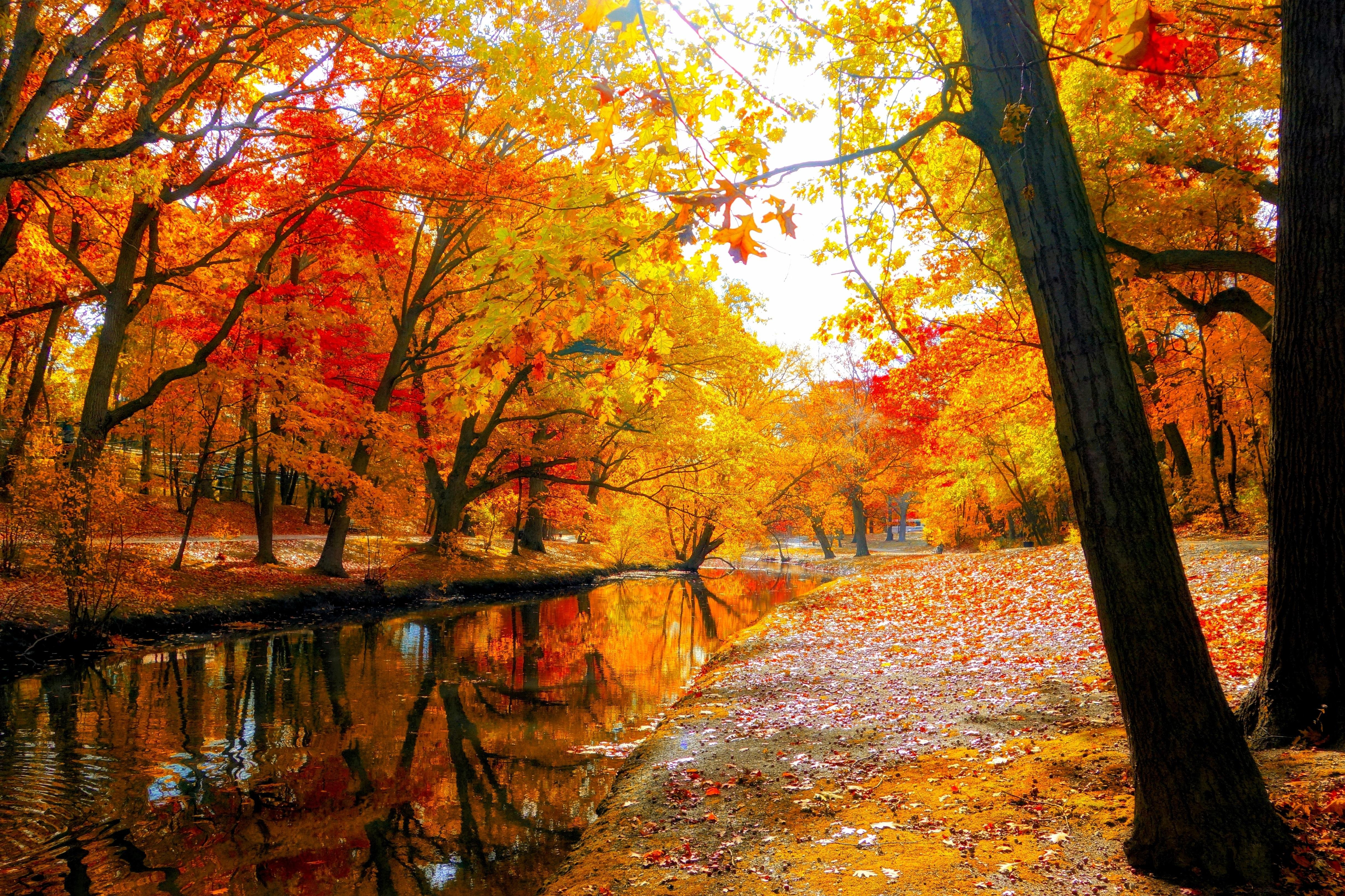 Wallpaper Images Of Fall Trees Lined Lake Autumn Fall Landscape Nature Tree Forest Leaf Leaves