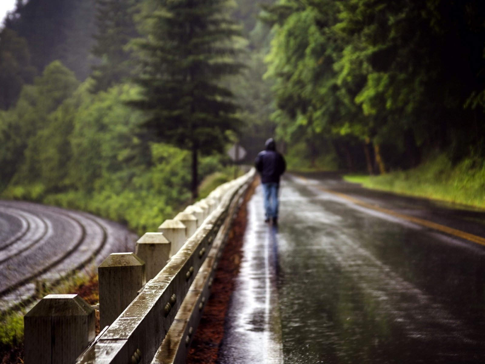 Alone Girl Wallpaper In Rain Man Walking Path Natural Beauty Of The Rain Forest