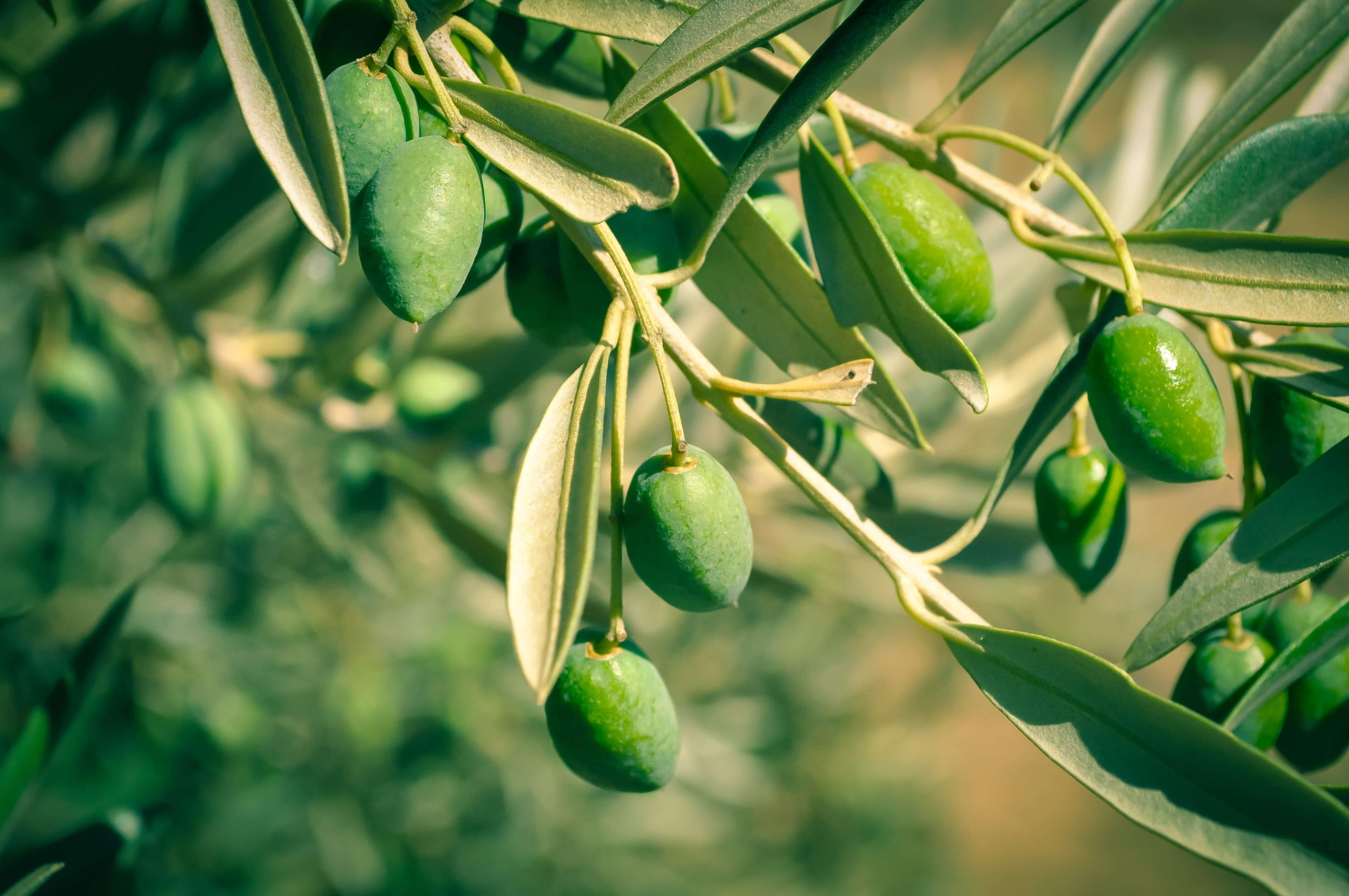 Beautiful Girl Wallpapers High Resolution Olives Hd Wallpics