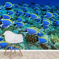 Surgeon Fish Wallpaper Wall Mural | Wallsauce UK