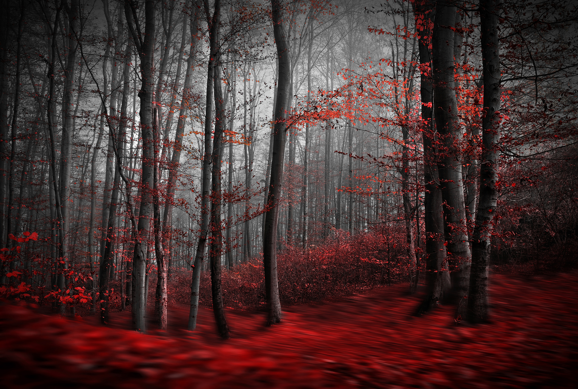 Iphone 6s Wallpaper Dimensions Red Carpet Forest Wall Mural Amp Red Carpet Forest Wallpaper