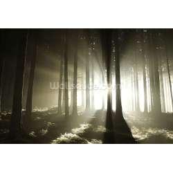 Small Crop Of Dark Forest Wallpaper