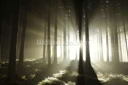 Small Of Dark Forest Wallpaper