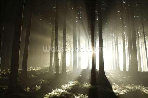 Medium Of Dark Forest Wallpaper