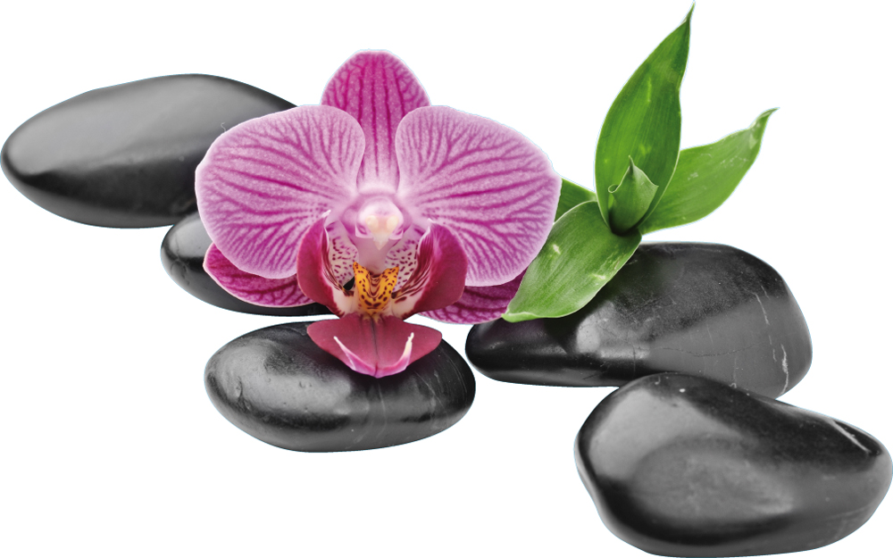 Wallstickers folies : Orchid Pebbles Wall Stickers