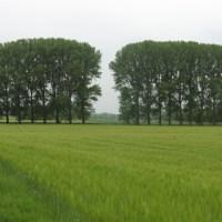 Tour 819 – Erftstadt-Friesheim – Der A2 durch die Felder ....