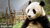 Gengda Valley Panda Cam powered by EXPLORE.org