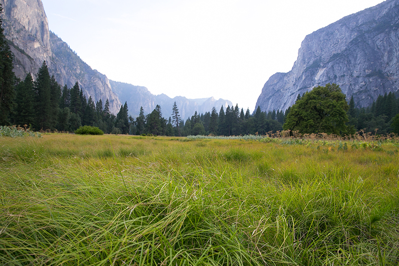 Yosemite Valley as seen near Yosemite Village